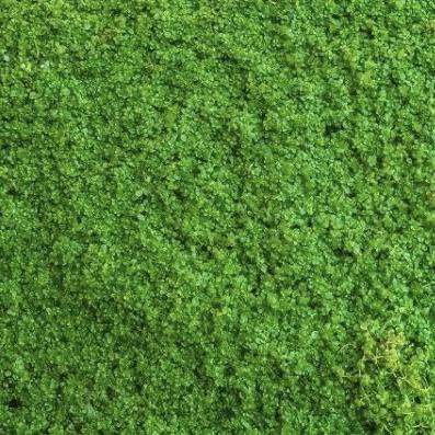 Plants Grown on Mat