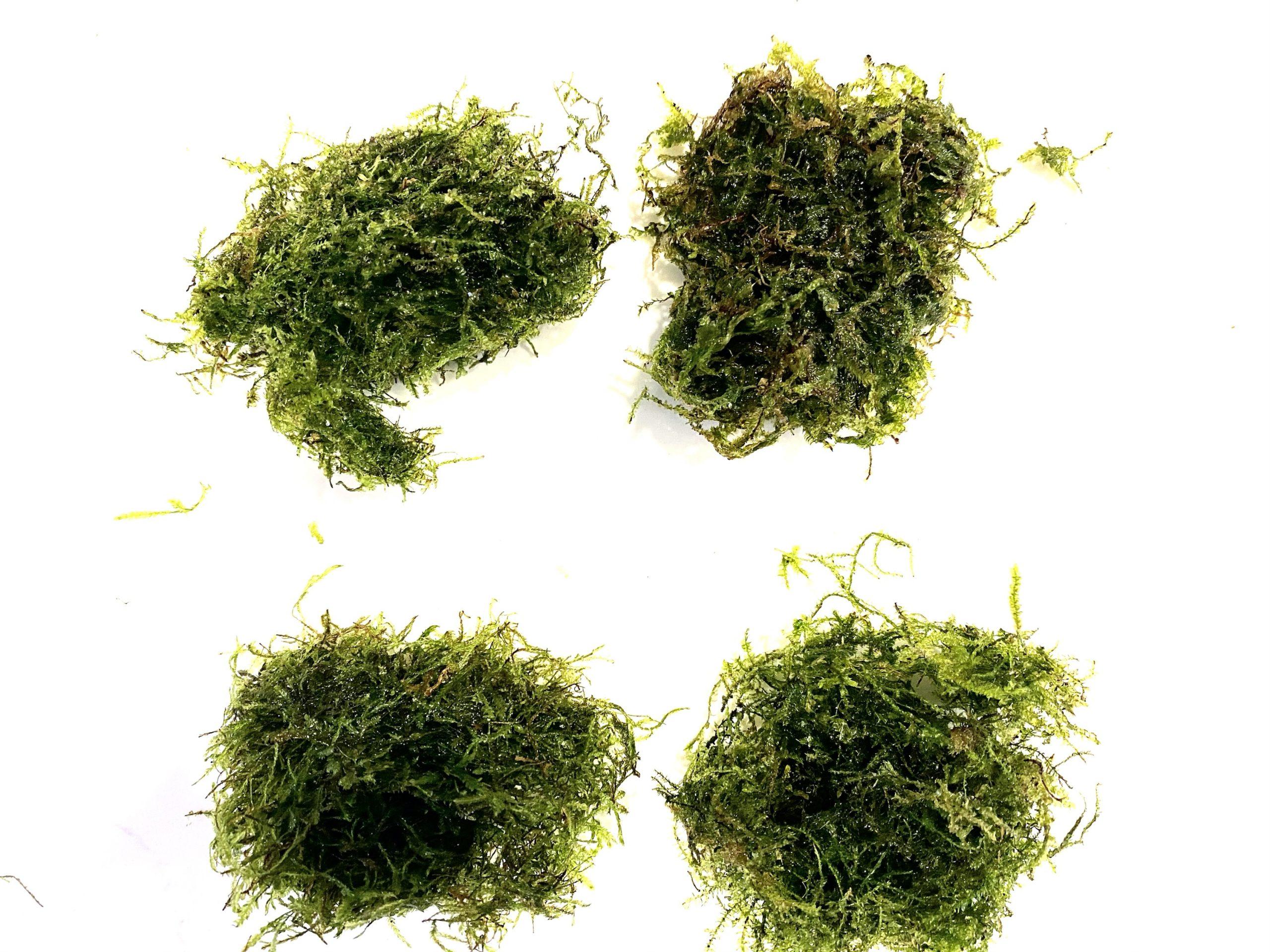 4 Moss Pack