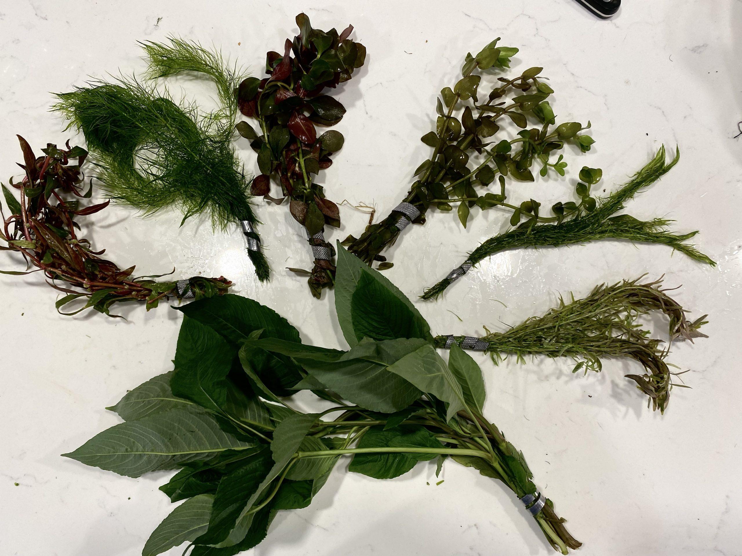 Easy Beginner Plant Pack 7 Species